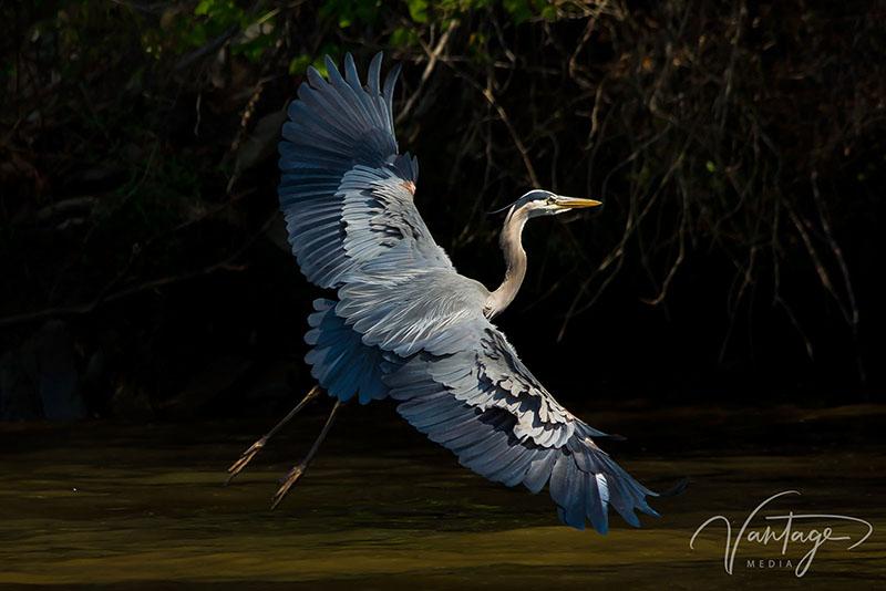 Wildlife Marketing Photography